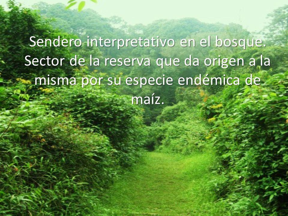 Sendero interpretativo en el bosque. Sector de la reserva que da origen a la misma por su especie endémica de maíz.
