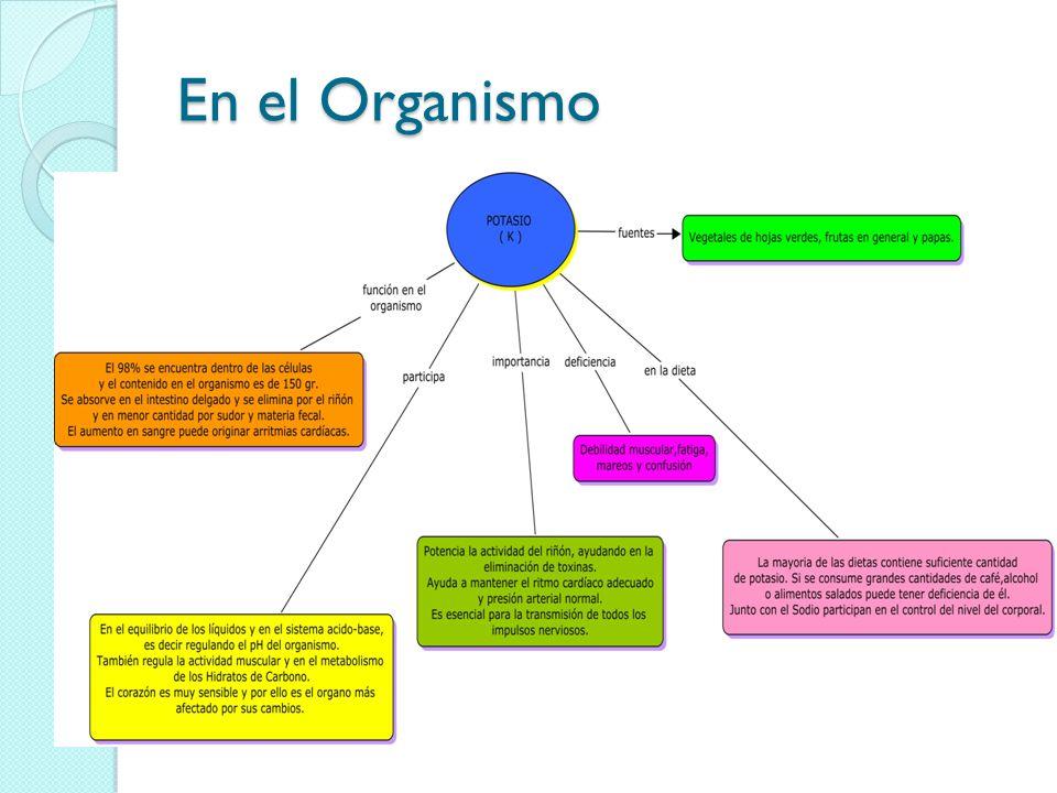 En el Organismo