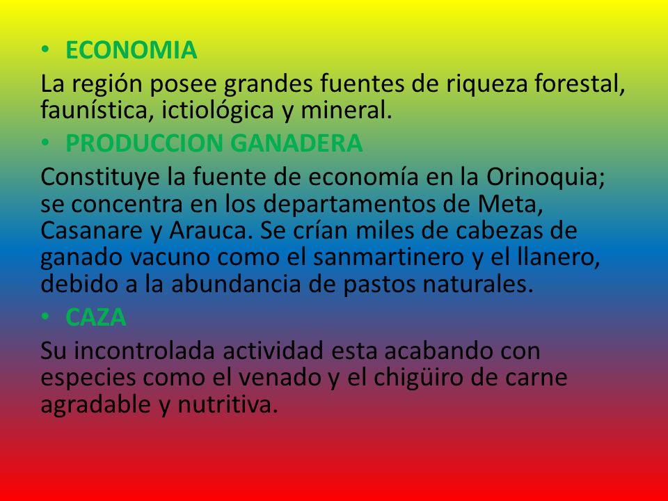 ECONOMIA La región posee grandes fuentes de riqueza forestal, faunística, ictiológica y mineral. PRODUCCION GANADERA Constituye la fuente de economía