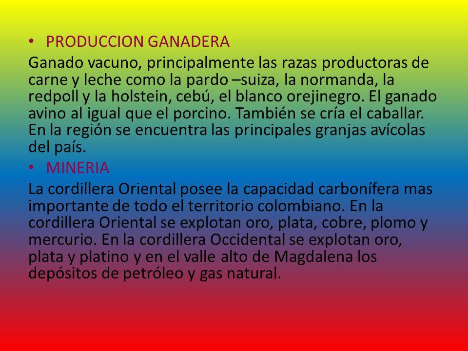 PRODUCCION GANADERA Ganado vacuno, principalmente las razas productoras de carne y leche como la pardo –suiza, la normanda, la redpoll y la holstein,