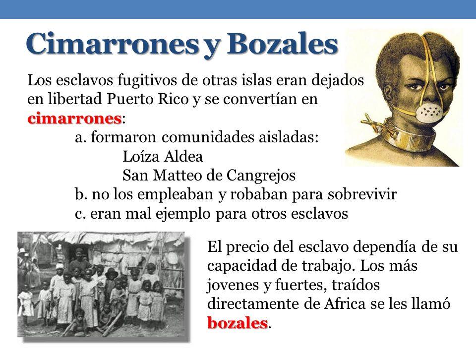 Cimarrones y Bozales cimarrones Los esclavos fugitivos de otras islas eran dejados en libertad Puerto Rico y se convertían en cimarrones: a. formaron
