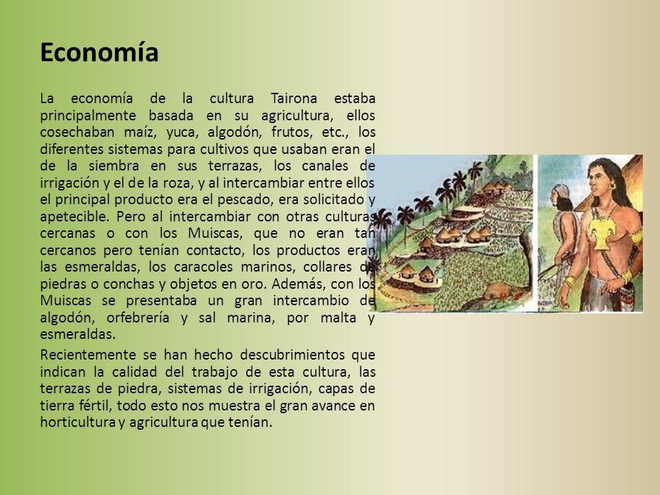 Economía La economía de la cultura Tairona estaba principalmente basada en su agricultura, ellos cosechaban maíz, yuca, algodón, frutos, etc., los diferentes sistemas para cultivos que usaban eran el de la siembra en sus terrazas, los canales de irrigación y el de la roza, y al intercambiar entre ellos el principal producto era el pescado, era solicitado y apetecible.