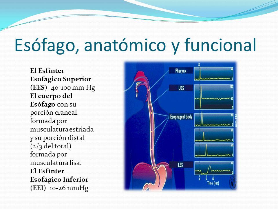 Esófago, anatómico y funcional El Esfínter Esofágico Superior (EES) 40-100 mm Hg El cuerpo del Esófago con su porción craneal formada por musculatura