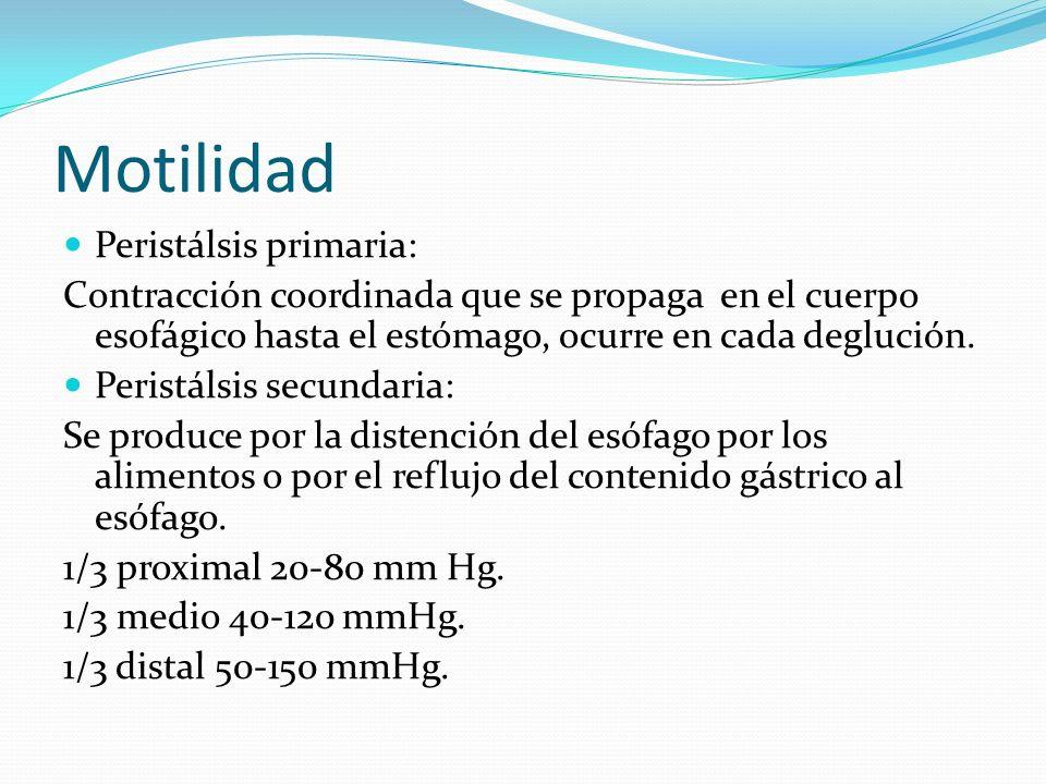 Motilidad Peristálsis primaria: Contracción coordinada que se propaga en el cuerpo esofágico hasta el estómago, ocurre en cada deglución. Peristálsis