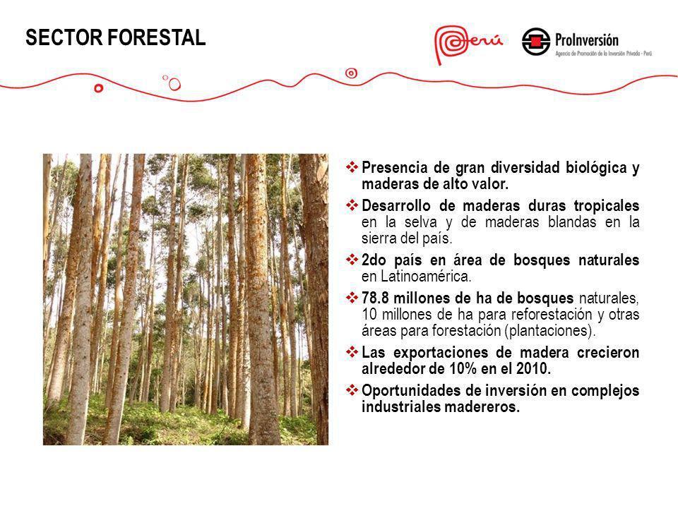 SECTOR FORESTAL Presencia de gran diversidad biológica y maderas de alto valor. Desarrollo de maderas duras tropicales en la selva y de maderas blanda