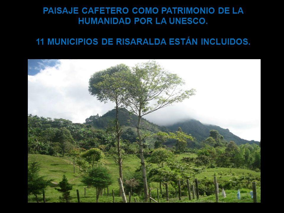 PAISAJE CAFETERO COMO PATRIMONIO DE LA HUMANIDAD POR LA UNESCO. 11 MUNICIPIOS DE RISARALDA ESTÁN INCLUIDOS.