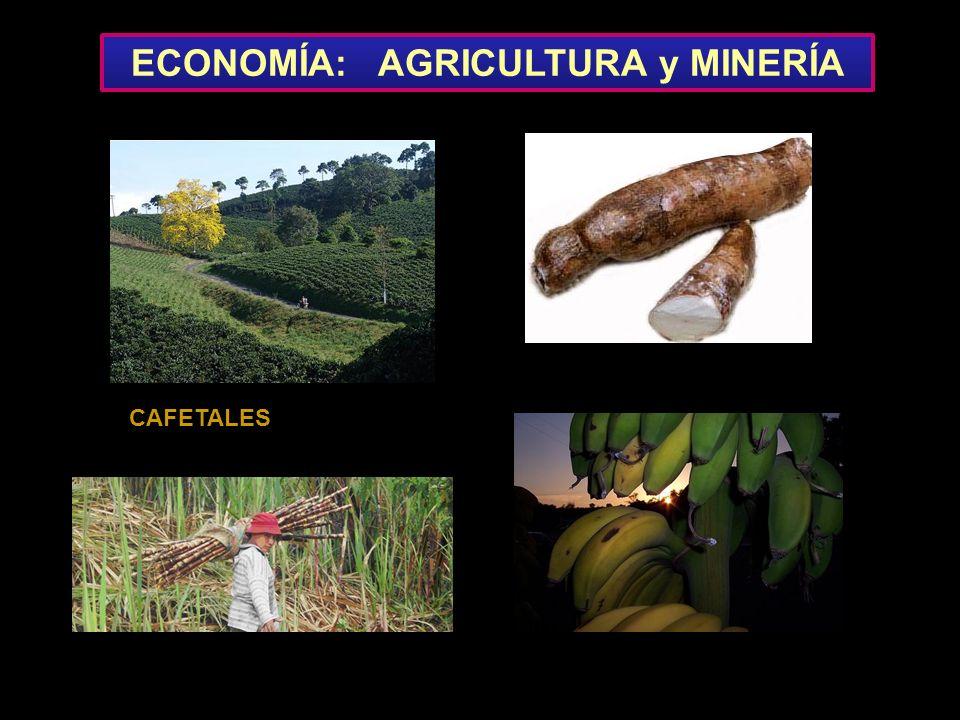 ECONOMÍA: AGRICULTURA y MINERÍA CAFETALES