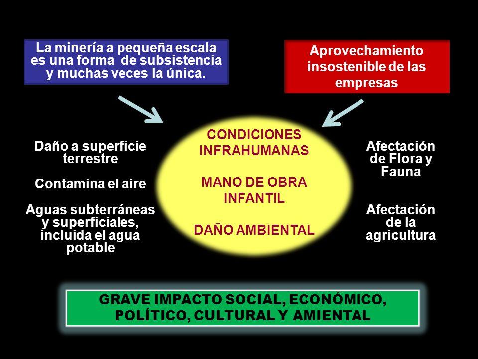 Nee Drua colabora con varios grupos ecológicos de la región: A DESALAMBRAR GUARDIANES DE LOS CERROS ALMA MATER UNIVERSIDAD DEL QUINDIO