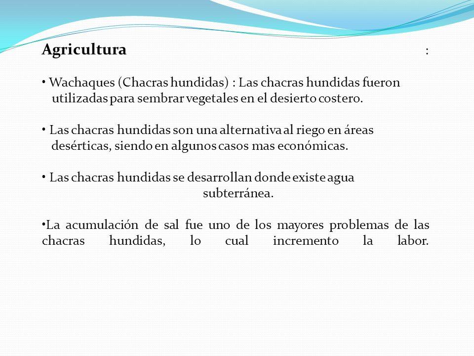 Agricultura : Wachaques (Chacras hundidas) : Las chacras hundidas fueron utilizadas para sembrar vegetales en el desierto costero. Las chacras hundida