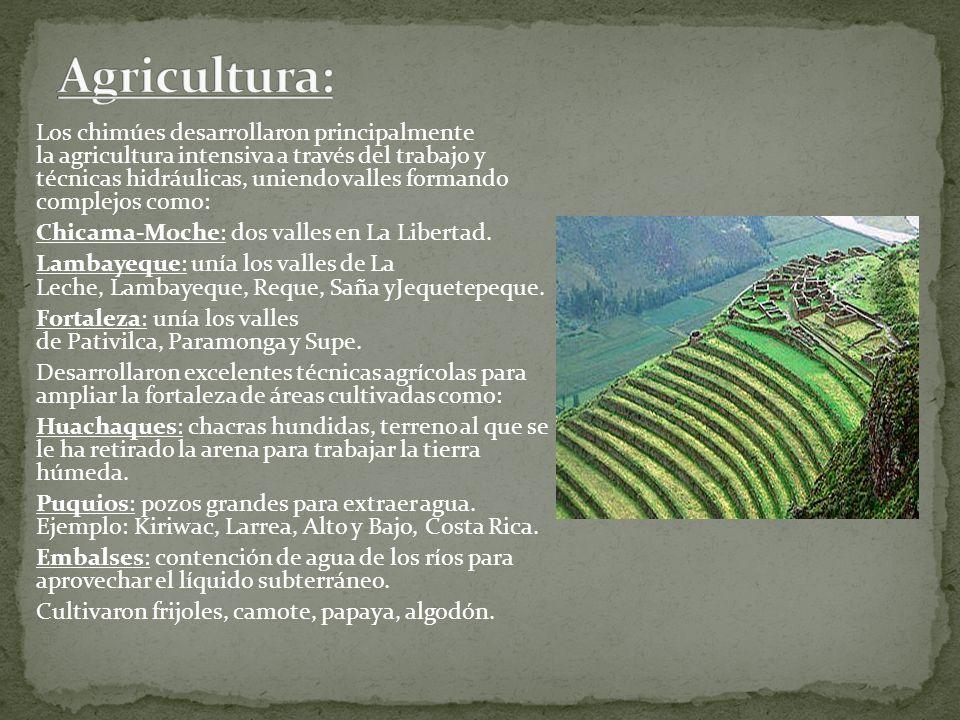 Los chimúes desarrollaron principalmente la agricultura intensiva a través del trabajo y técnicas hidráulicas, uniendo valles formando complejos como: