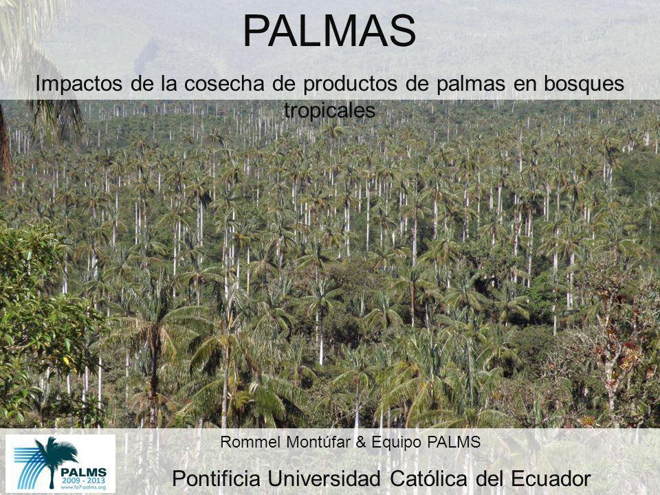 PALMAS Impactos de la cosecha de productos de palmas en bosques tropicales Rommel Montúfar & Equipo PALMS Pontificia Universidad Católica del Ecuador