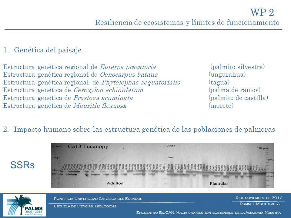 1.Genética del paisaje Estructura genética regional de Euterpe precatoria (palmito silvestre) Estructura genética regional de Oenocarpus bataua (ungur
