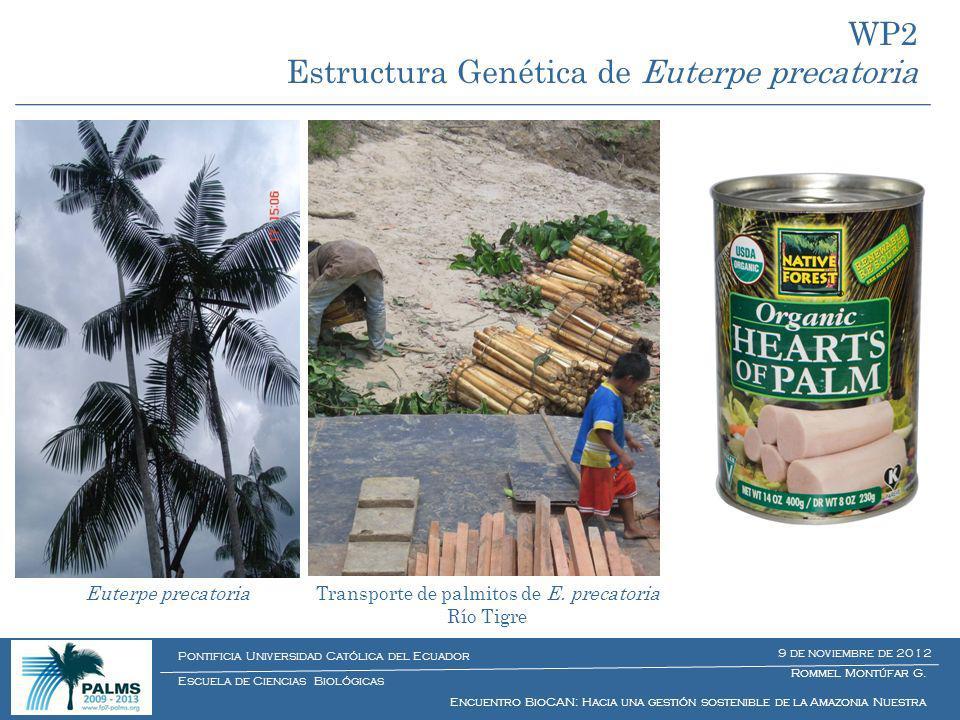 Euterpe precatoriaTransporte de palmitos de E. precatoria Río Tigre Rommel Montúfar G. Encuentro BioCAN: Hacia una gestión sostenible de la Amazonia N