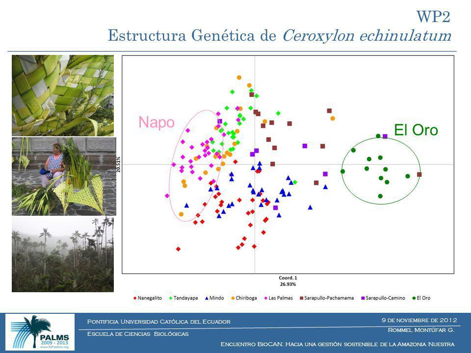 WP2 Estructura Genética de Ceroxylon echinulatum El Oro Napo Rommel Montúfar G. Encuentro BioCAN: Hacia una gestión sostenible de la Amazonia Nuestra