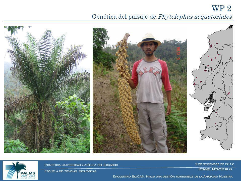 WP 2 Genética del paisaje de Phytelephas aequatoriales Rommel Montúfar G. Encuentro BioCAN: Hacia una gestión sostenible de la Amazonia Nuestra Escuel