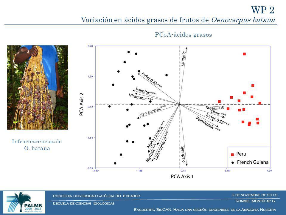 WP 2 Variación en ácidos grasos de frutos de Oenocarpus bataua Infructescencias de O. bataua Estructura bioquímica de frutos de O. bataua PCoA-ácidos