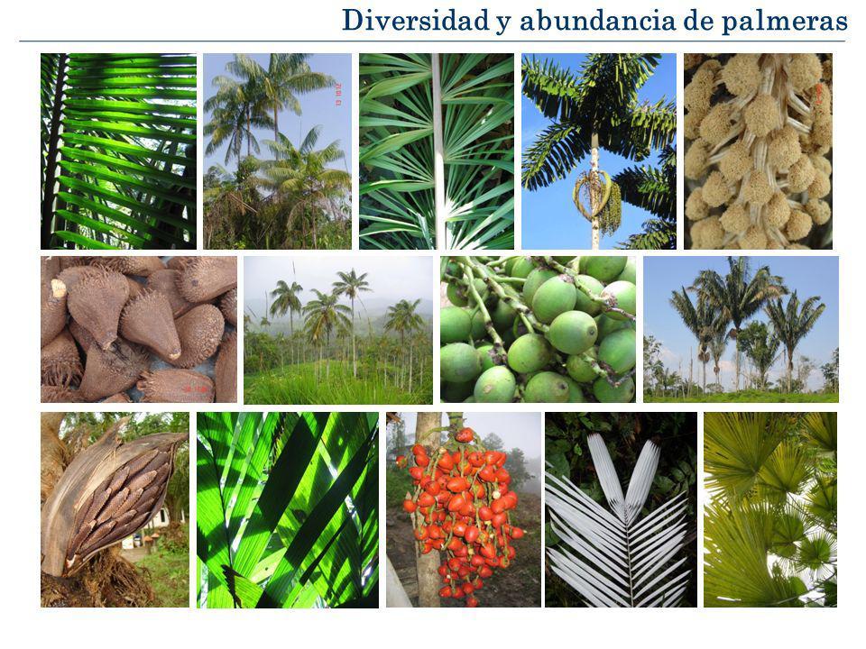 Diversidad de palmeras Número de especies Pintaud, J-C., et al.