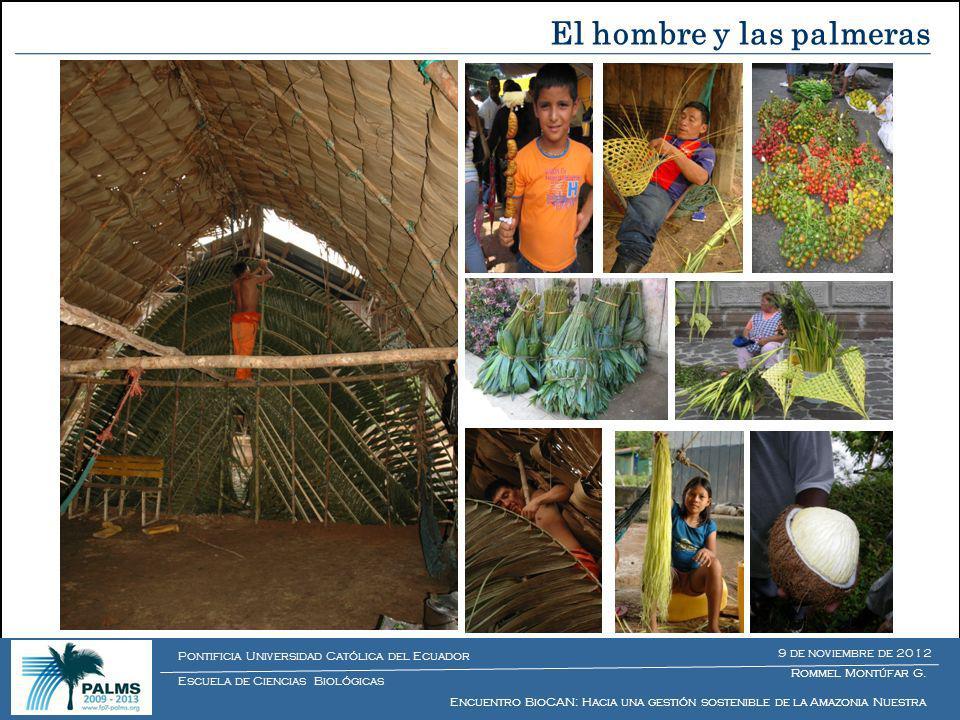 Proyecto internacional y multidisciplinario que estudia el impacto de los sistemas de cosecha en la diversidad y salud ecológica de las poblaciones de palmeras Director del Proyecto: Dr.