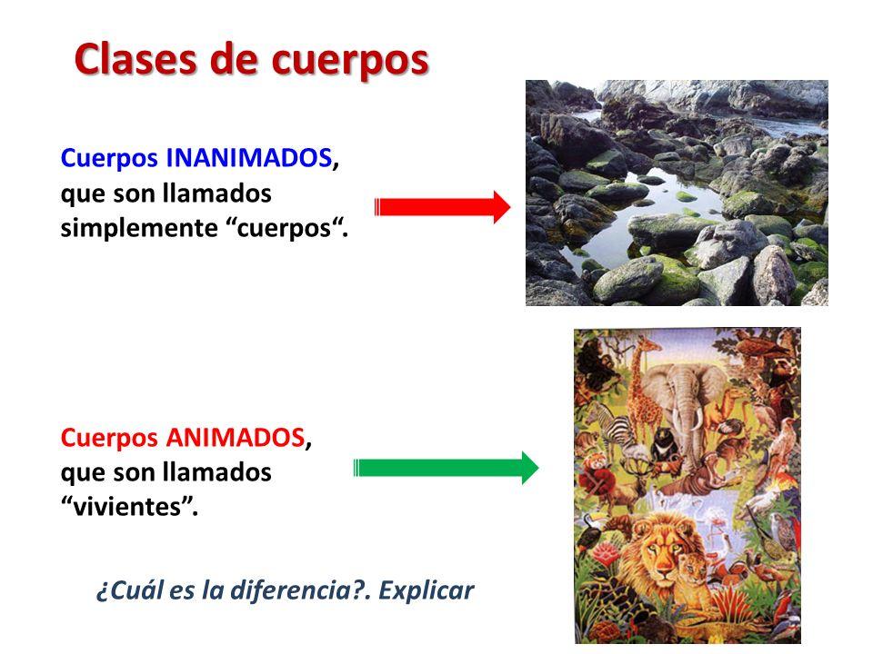 Clases de cuerpos Cuerpos INANIMADOS, que son llamados simplemente cuerpos. Cuerpos ANIMADOS, que son llamados vivientes. ¿Cuál es la diferencia?. Exp