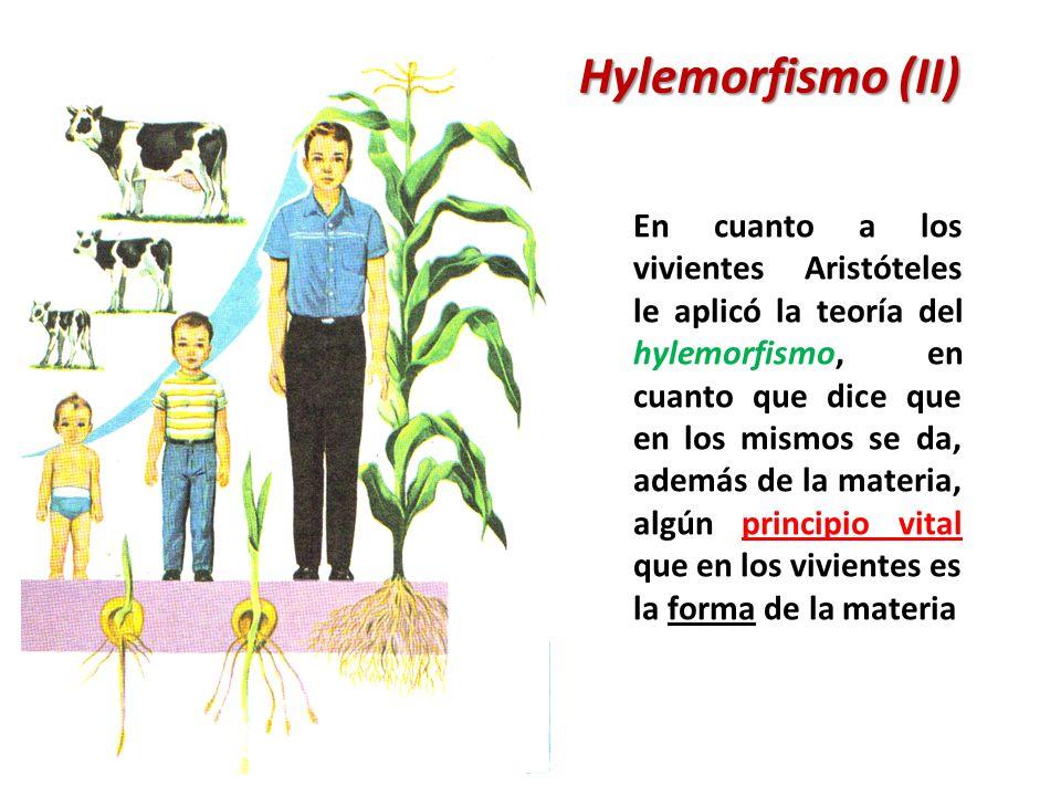 Hylemorfismo (II) En cuanto a los vivientes Aristóteles le aplicó la teoría del hylemorfismo, en cuanto que dice que en los mismos se da, además de la