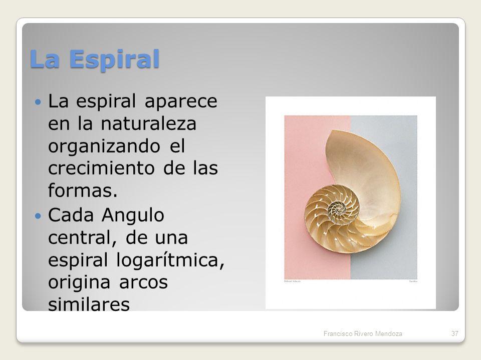 La sucesión de Fibonacci Una sucesión de números naturales 1, 1, 2, 3, 5, 8, 13, 21, 34,…… Una sucesión de proporciones racionales 1 /1, 2/1, 3 /2, 5/