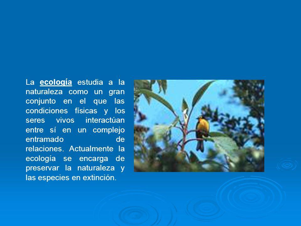 La ecología estudia a la naturaleza como un gran conjunto en el que las condiciones físicas y los seres vivos interactúan entre sí en un complejo entr