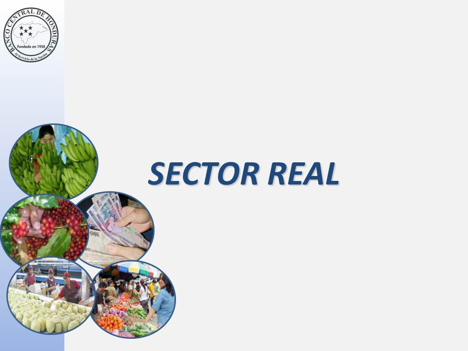 SECTOR REAL