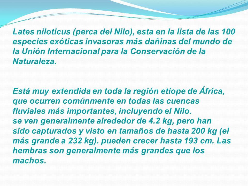 Lates niloticus (perca del Nilo), esta en la lista de las 100 especies exóticas invasoras más dañinas del mundo de la Unión Internacional para la Cons