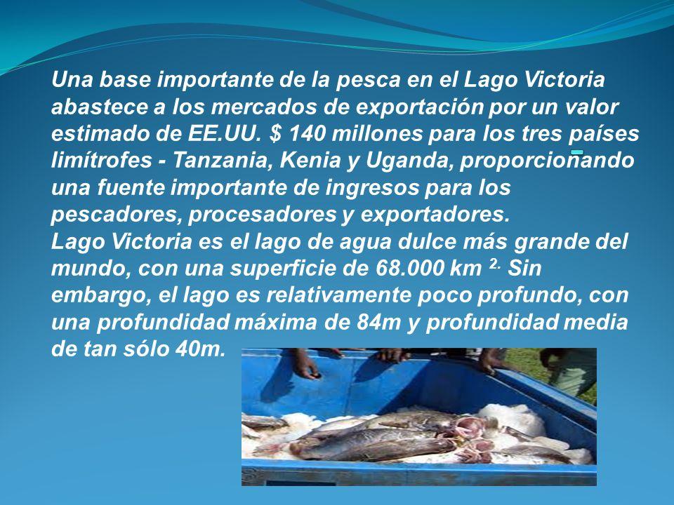 Una base importante de la pesca en el Lago Victoria abastece a los mercados de exportación por un valor estimado de EE.UU. $ 140 millones para los tre