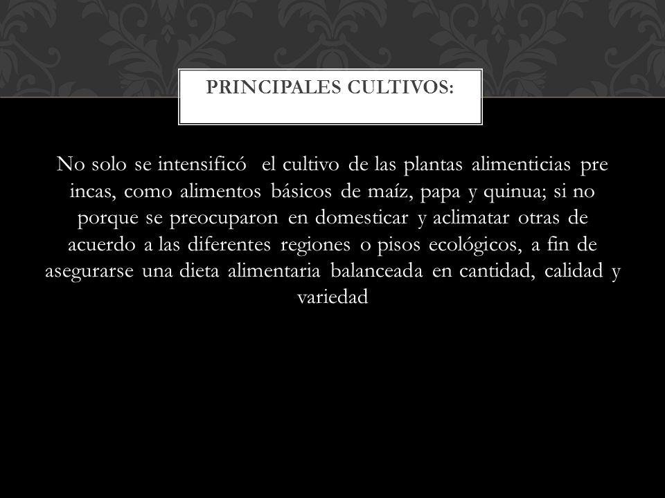 Pisac CIVIL