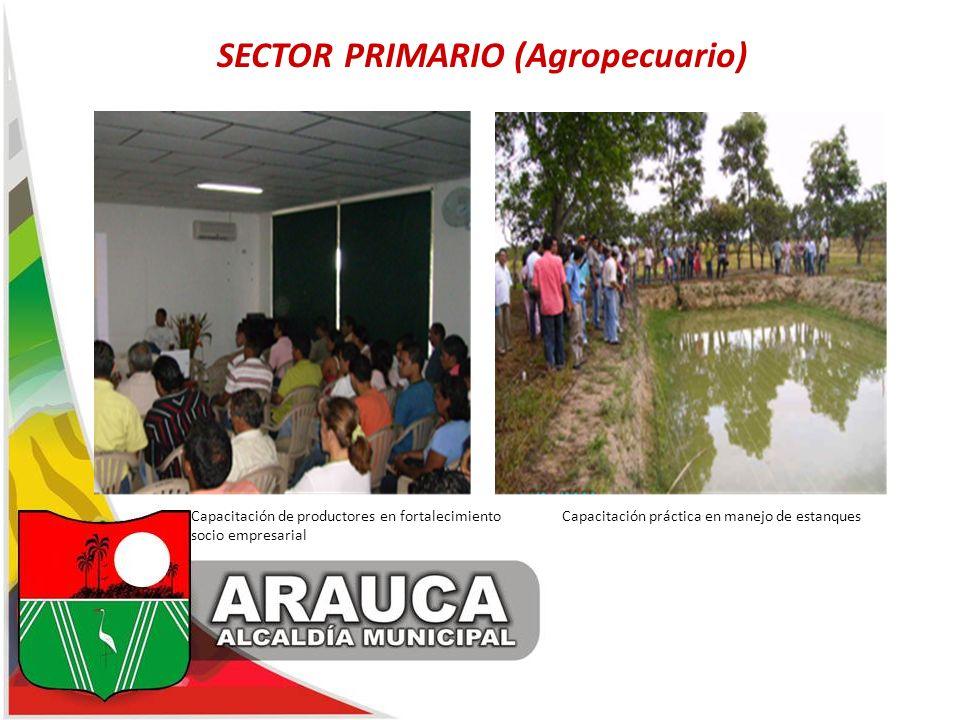 SECTOR PRIMARIO (Agropecuario) Capacitación de productores en fortalecimiento Capacitación práctica en manejo de estanques socio empresarial