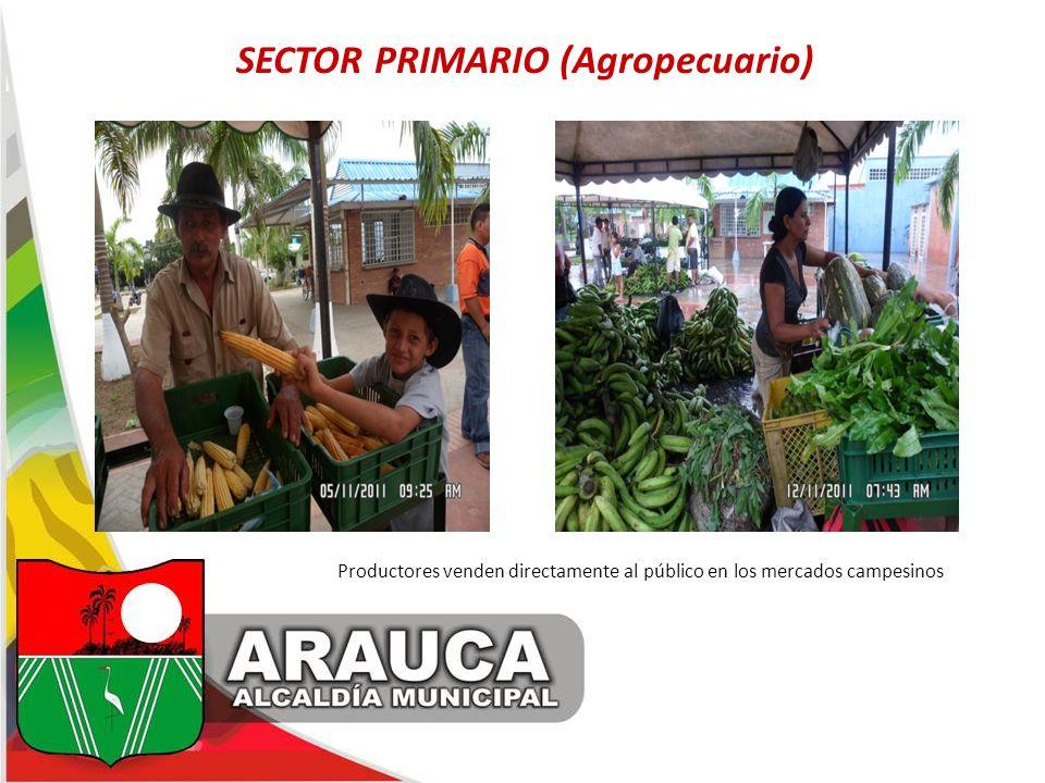 SECTOR PRIMARIO (Agropecuario) Productores venden directamente al público en los mercados campesinos