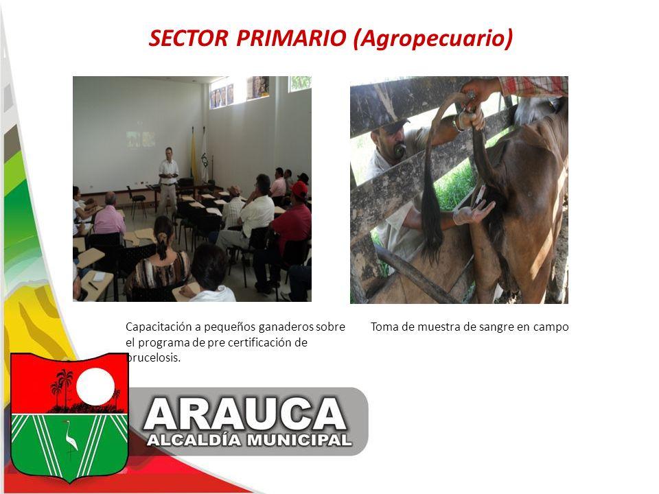 SECTOR PRIMARIO (Agropecuario) Capacitación a pequeños ganaderos sobre Toma de muestra de sangre en campo el programa de pre certificación de brucelos