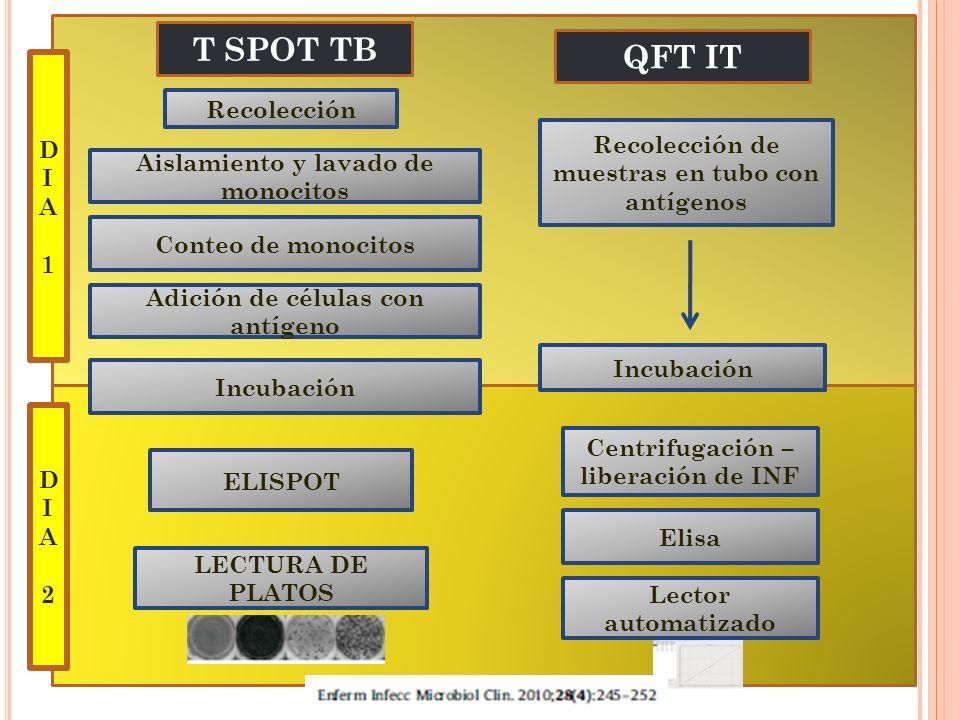 Recolección Aislamiento y lavado de monocitos Conteo de monocitos Adición de células con antígeno Incubación ELISPOT LECTURA DE PLATOS Recolección de