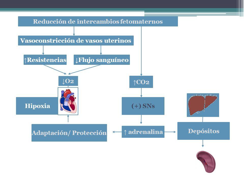Reducción de intercambios fetomaternos O2 CO2 (+) SNs Hipoxia adrenalina Adaptación/ Protección Depósitos Vasoconstricción de vasos uterinos Resistencias Flujo sanguíneo