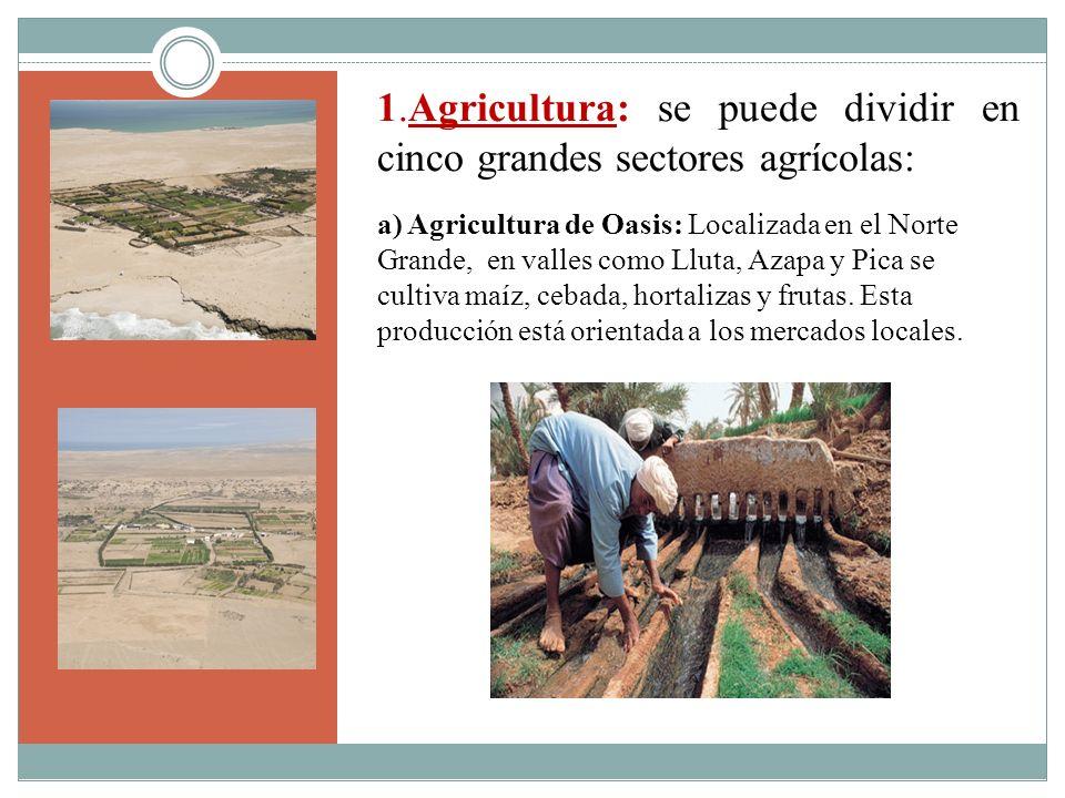 1.Agricultura: se puede dividir en cinco grandes sectores agrícolas: a) Agricultura de Oasis: Localizada en el Norte Grande, en valles como Lluta, Aza