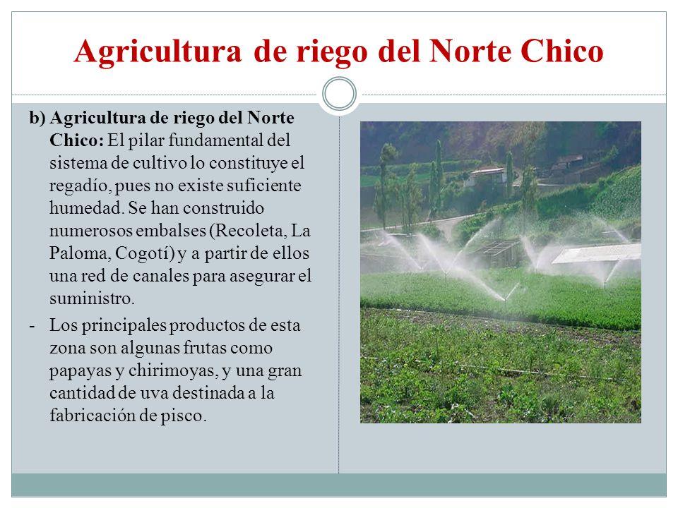 Agricultura de riego del Norte Chico b) Agricultura de riego del Norte Chico: El pilar fundamental del sistema de cultivo lo constituye el regadío, pu
