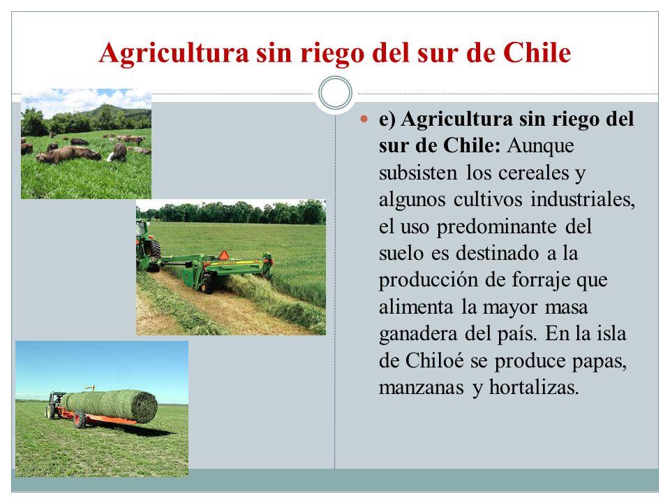 Agricultura sin riego del sur de Chile e) Agricultura sin riego del sur de Chile: Aunque subsisten los cereales y algunos cultivos industriales, el us