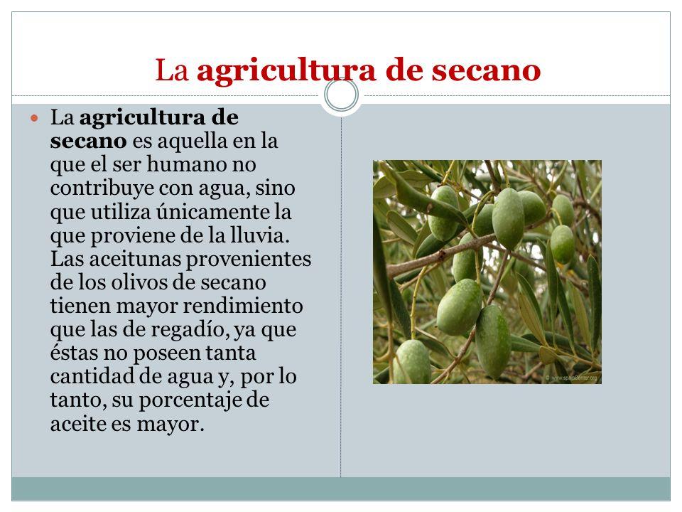 La agricultura de secano La agricultura de secano es aquella en la que el ser humano no contribuye con agua, sino que utiliza únicamente la que provie