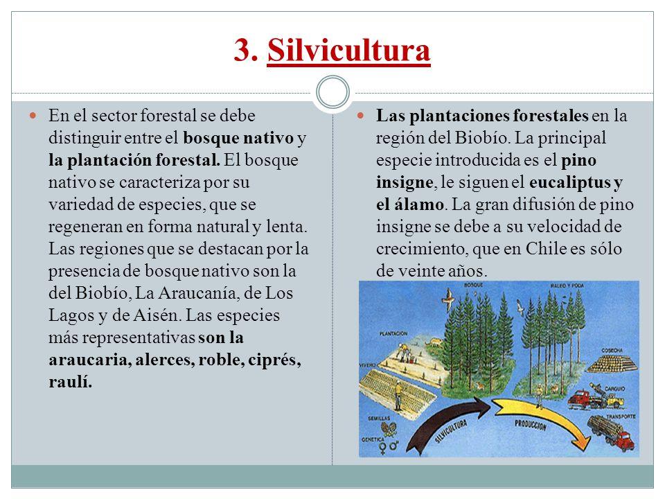 3. Silvicultura En el sector forestal se debe distinguir entre el bosque nativo y la plantación forestal. El bosque nativo se caracteriza por su varie