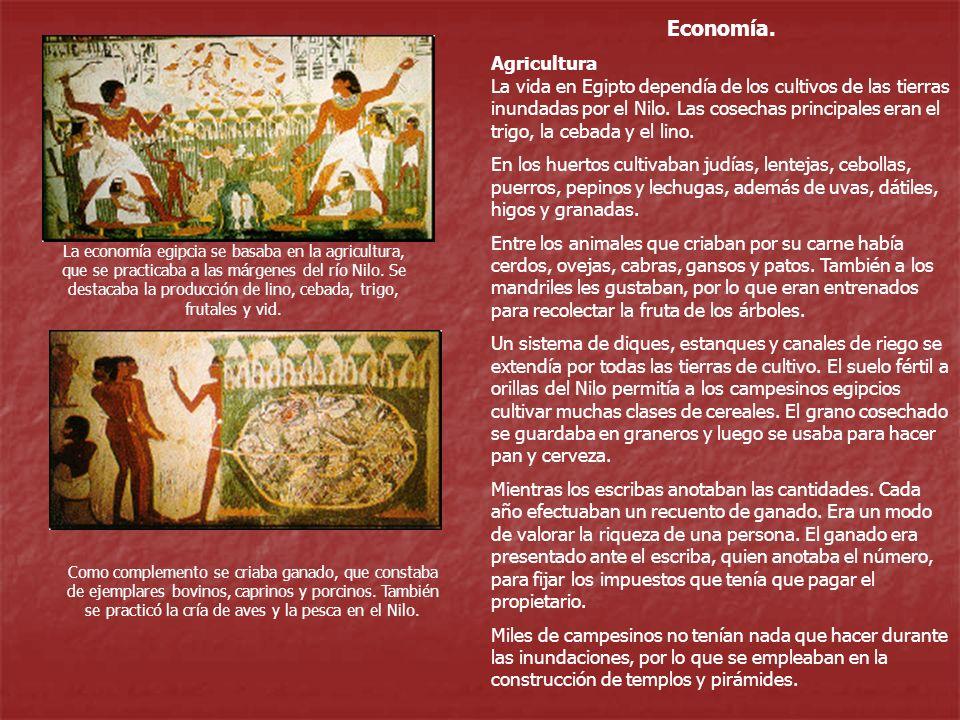 Economía. Agricultura La vida en Egipto dependía de los cultivos de las tierras inundadas por el Nilo. Las cosechas principales eran el trigo, la ceba