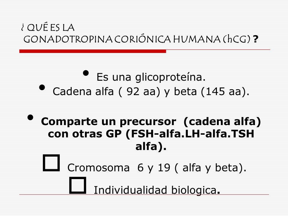 ¿ QUÉ ES LA GONADOTROPINA CORIÓNICA HUMANA (hCG) ? Es una glicoproteína. Cadena alfa ( 92 aa) y beta (145 aa). Comparte un precursor (cadena alfa) con