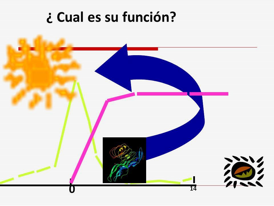 ¿ Cual es su función? 0 14