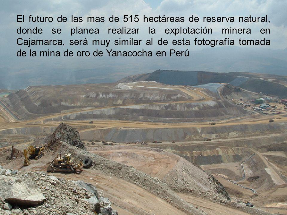 El futuro de las mas de 515 hectáreas de reserva natural, donde se planea realizar la explotación minera en Cajamarca, será muy similar al de esta fot