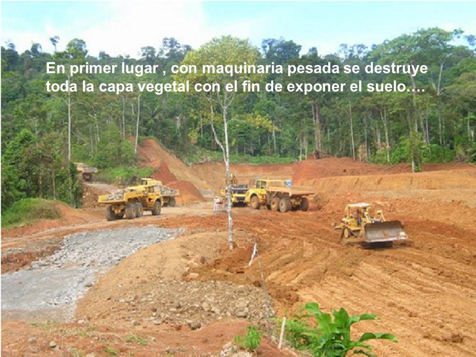 En primer lugar, con maquinaria pesada se destruye toda la capa vegetal con el fin de exponer el suelo….