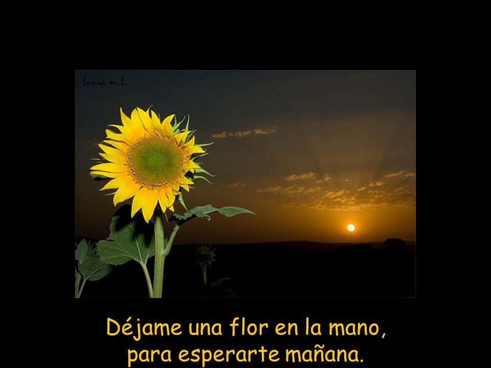 Déjame una flor en la mano, para esperarte mañana.