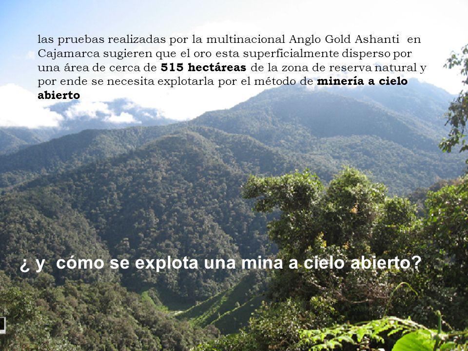 las pruebas realizadas por la multinacional Anglo Gold Ashanti en Cajamarca sugieren que el oro esta superficialmente disperso por una área de cerca de 515 hectáreas de la zona de reserva natural y por ende se necesita explotarla por el método de minería a cielo abierto ¿ y cómo se explota una mina a cielo abierto