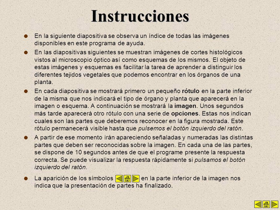 Instrucciones l En la siguiente diapositiva se observa un índice de todas las imágenes disponibles en este programa de ayuda.