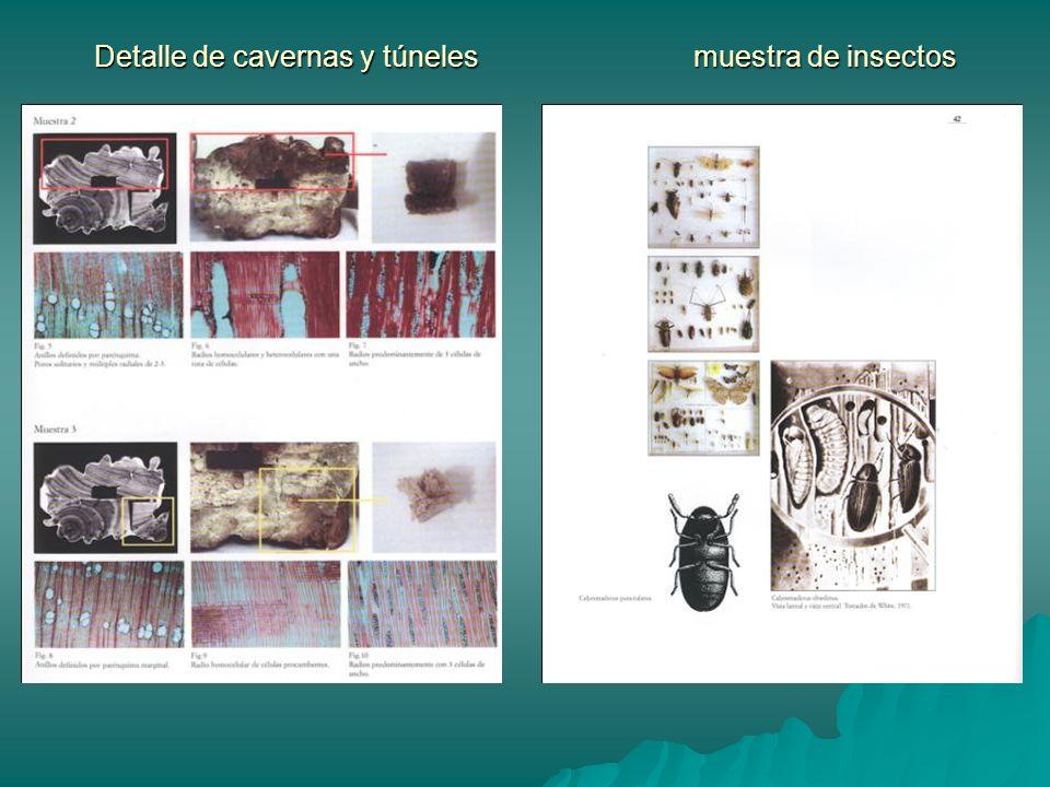 Detalle de cavernas y túneles muestra de insectos