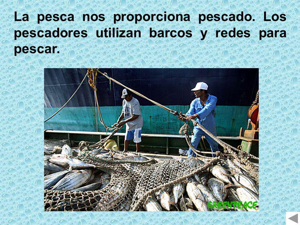 La pesca nos proporciona pescado. Los pescadores utilizan barcos y redes para pescar.